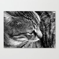Black and White Tabby Cat Canvas Print
