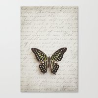 Graphium agamemnon butterfly Canvas Print
