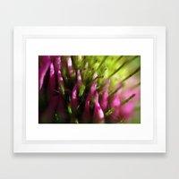 Purple Clover Framed Art Print