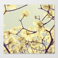 Magnolia Dream Canvas Print