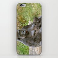Gorilla Mother and Baby iPhone & iPod Skin