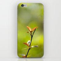 Spring Begins iPhone & iPod Skin