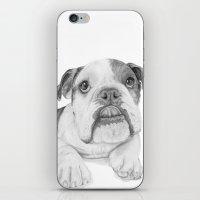 A Bulldog Puppy iPhone & iPod Skin