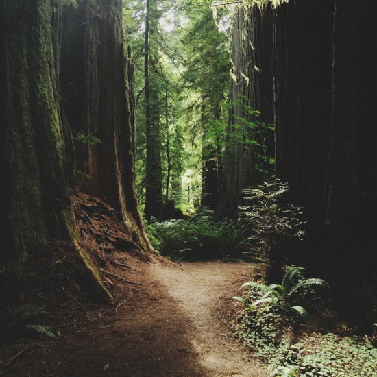 Redwood Trail Art Print