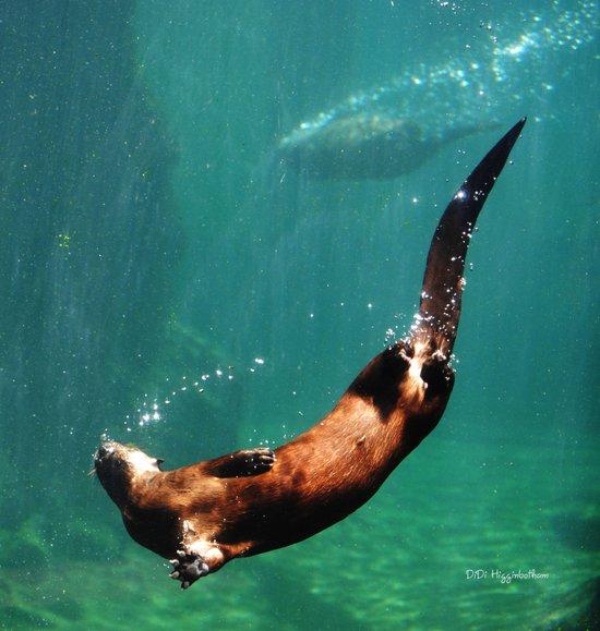 Everybody Otter Have Shiny Bubbles Art Print