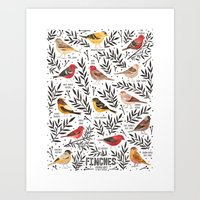 Finches of North American Field Guide Art Print