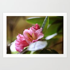 Pretty in Pink4 Art Print