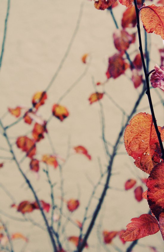 Contrasted fall Canvas Print