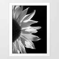 Sunflower by Torchlight Art Print