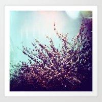 Holga Flowers II Art Print