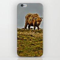 Highland Cow iPhone & iPod Skin