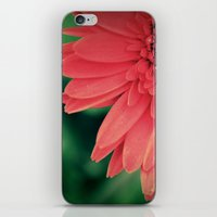 Gerber Daisy. iPhone & iPod Skin