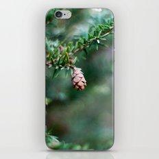Tiny Pine Cone iPhone & iPod Skin