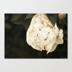 This Year's Love Canvas Print