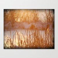 Winter Swamp Sun Rays Canvas Print