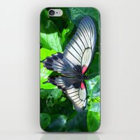 Butterfly 2 iPhone & iPod Skin