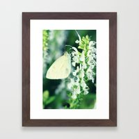 White Cabbage Butterfly On A Flower, Pieris rapae Framed Art Print