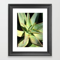 Agave I Framed Art Print
