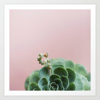 Echeveria On Pink Art Print