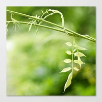The Little Leaves Canvas Print
