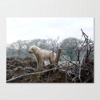 Wilderness Dog Canvas Print