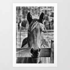 Waiting (Black and White Horse #1)  Art Print