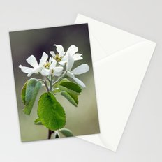 Malus flowers - spring 30 Stationery Cards
