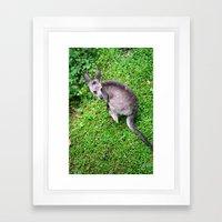 Little Joey Framed Art Print