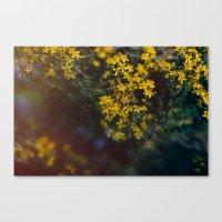 Floral Daze Canvas Print
