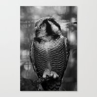 Owl series no.1 Canvas Print
