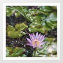 Beautiful waterlily Art Print