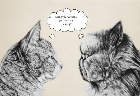 Cat Confusion Art Print
