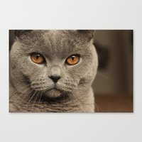 Diesel, the cat - (close up)  Canvas Print