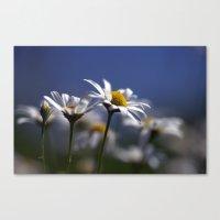 Daisies 3610 Canvas Print