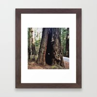 Inside A Redwood  Framed Art Print