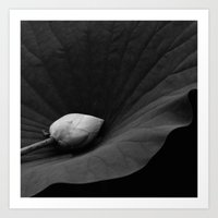 Bud on Lotus Leaf Art Print
