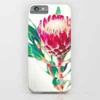 iPhone Cases featuring Vintage Protea  by micklyn
