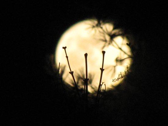 Perigee Moon Art Print