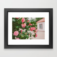 Camellias Framed Art Print