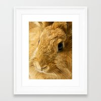 Little Rabbit II Framed Art Print