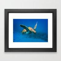 Bajan Turtle 2 Framed Art Print