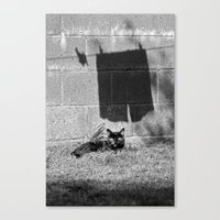 The cat and the pants Canvas Print