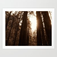 Light through the trees Art Print