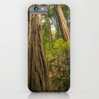 iPhone & iPod Case featuring Giant Redwoods by Ryan Fernandez Photography