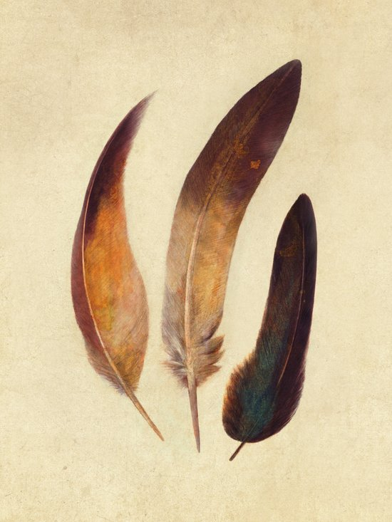Three Feathers  Art Print