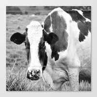 Cow B&W Canvas Print