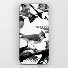 A Volery of Birds iPhone & iPod Skin