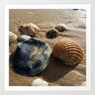 Art Print featuring Seashell by Sven Herkenrath