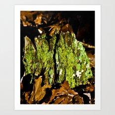 Mountain Moss Art Print