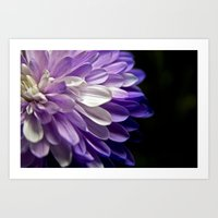 Burst Of Purple  Art Print